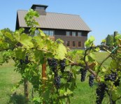 Shelburne Vineyard VT Artisan Village