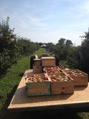 Shelburne Orchards Apple Picking_Vermont Artisan Village