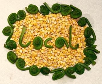tortillas corn.jpg